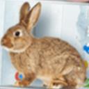 手机的小兔子免费版