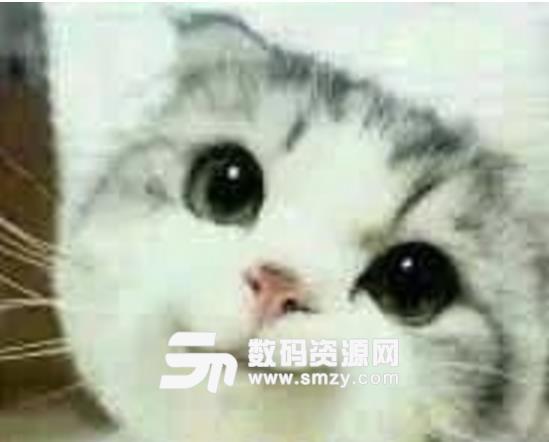 魔性猫表情包无水印版来表达,让你的聊天气氛更加的萌,小猫咪很可爱哦