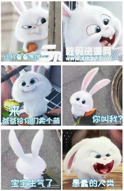 爱宠大机密兔子gof表情包(小白动态表情包) 最新版图片