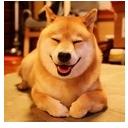 了每天微笑的柴犬,柴犬迷之微笑微信表情包里面是一些柴犬微笑的动图图片