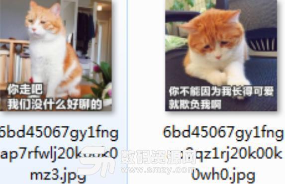 首页 软件下载 联络聊天 qq 表情 > 小猫咪带字表情包高清版下载