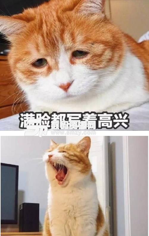 喜欢小猫咪的各位千万别错过了哦,小编这里有共享猫咪qq表情包,如果你喜欢橘猫的话应该知道十只橘猫九只胖,而小编找到的共享猫咪qq表情包则是一直特别胖的大橘猫哦,如果你也喜欢萌萌的笨笨的橘猫的话,就千万别错过了这款表情包哦!