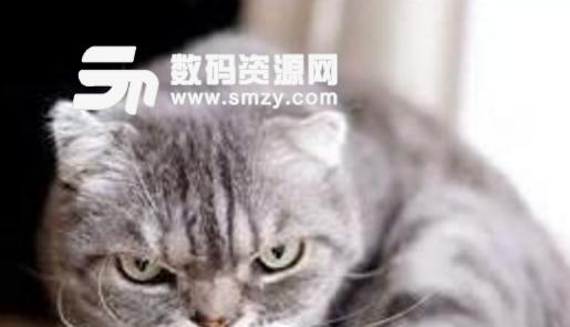 抖音现在非常的火热,其中各种喵星人更加的火爆。抖音社会猫表情包最新版就是一款在抖音上非常火的社会猫表情大全,喵星人的样子凶凶的,很有社会人的感觉,非常可爱。如果你也是喜欢刷抖音,喜欢猫的人那就一定不要错过了抖音社会猫表情包最新版哦!