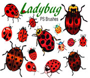 PS甲虫瓢虫笔刷