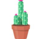 kaktus Mac��