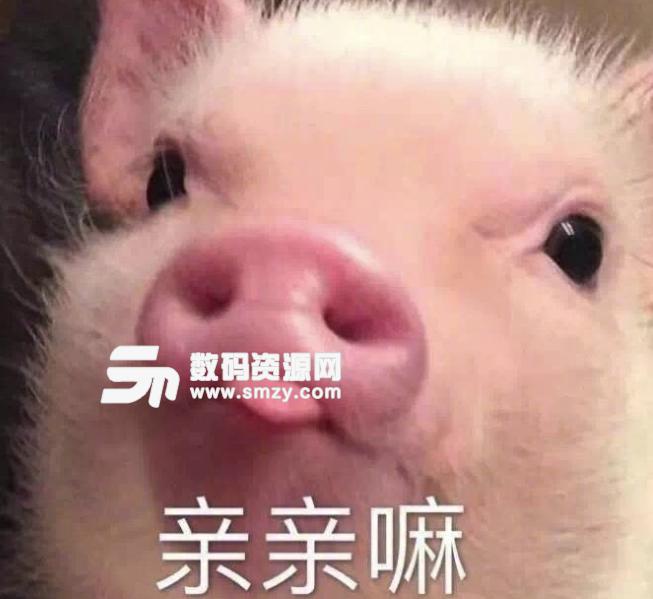 小香猪微信头像可爱