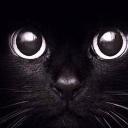 苹果黑猫睁眼动态壁纸无水印