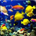 4D Underwater World LWP安卓版(手机4D动态壁纸) v1.1 免费版