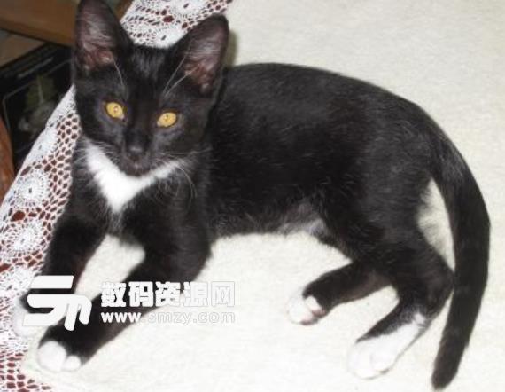 星露谷物语的猫咪MOD