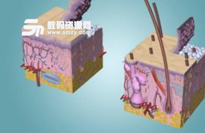 人体解剖学图集3D安卓版