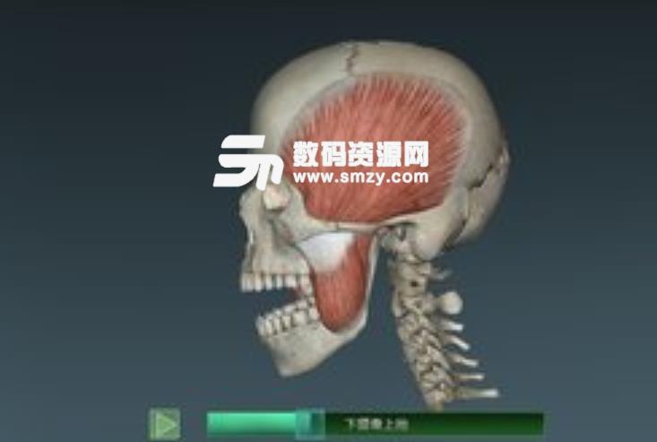 人体解剖学图集3D