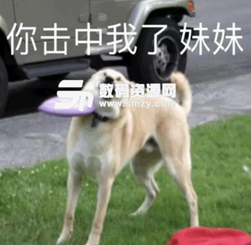 狗狗的沙雕表情包合集