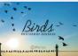 大雁、鸟群、高空飞鸟PS鸟笔刷素材