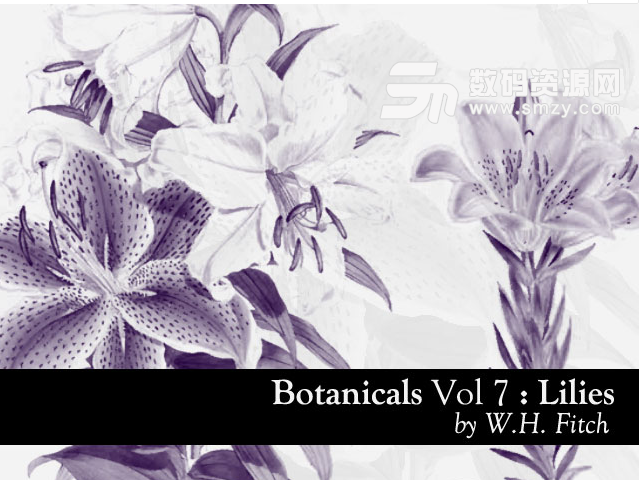 植物百合花图案PS笔刷下载