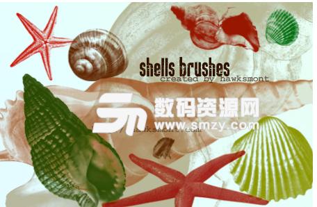 海螺、海星、貝殼、扇貝Photoshop筆刷素材