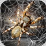 蜘蛛模拟生存安卓app