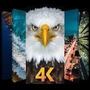 4K壁纸免费版